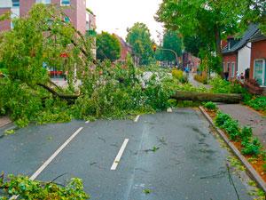 Sturmschaden durch Baum